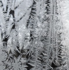 Jack Frost #39 (caboose_rodeo) Tags: winter favorite 6541 ilikeice