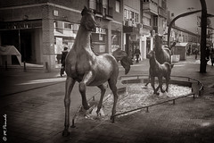 010586 - Torrejn de Ardoz (M.Peinado) Tags: blackandwhite bw espaa byn blancoynegro caballo caballos spain escultura bq 2014 comunidaddemadrid torrejndeardoz ccby calleenmedio bqaquaris50 diciembrede2014 18122014 calledeenmedio