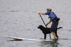 Dog Paddle (joegeraci364) Tags: ocean sea dog pet color art beach water river print fun coast photo lab labrador image connecticut board paddle hobby retriever shore boating leisure mystic