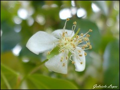Delicada (gabi.sl23) Tags: flower verde green whiteflower bokeh flor novafriburgo florzinha friburgo littleflower smallflower florblanca florbranca florpequea