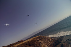 horizontes (betho itinerante) Tags: pez color luz sol azul libertad mar agua playa dia movimiento ave cielo pico alas aire horizonte plumas