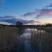 Pond of magenta