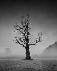 Winter tree (Richard Hunter d3s) Tags: