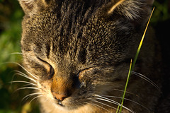 IMG_6033 (Lightcatcher66) Tags: florafauna makros katzencats lightcatcher66