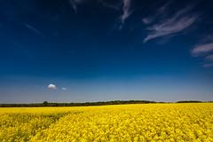 Colours of Sweden (Lukasz Lukomski) Tags: uk greatbritain flowers blue england sky white field yellow clouds landscape north pole kwiaty wirral anglia rapeseed merseyside rzepak niebieskie chmury niebo ty biae sigma1020 krajobraz wielkabrytania storeton nikond7200 lukaszlukomski