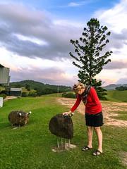 Patting the wildlife! (NettyA) Tags: sunset art clouds rural countryside artgallery au australia nsw newsouthwales tweed 2016 murwillumbah rockanimals appleiphone6 tweedregionalgallery southmurwillumbah margaretolleyartgallery margaretolleygallery