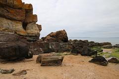 2016 - 16.5.15 Gullane Beach (34) (marie137) Tags: trees sea horses cloud sun flower castle beach dogs animals rock landscape sand berry ben bass harbour ruin gsd marie137