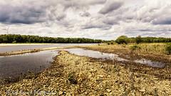 20160521_4091_Meers-bw (Rob_Boon) Tags: netherlands maas limburg meers robboon colefpro4