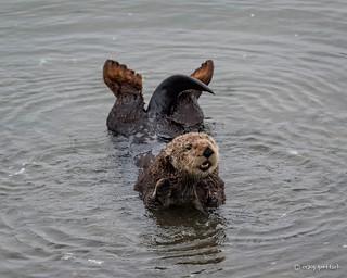 Yoga Pose - Otter Style