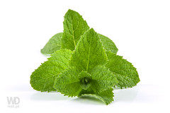 Beautiful mint leaves (WDnet) Tags: wild food white plant macro green texture cooking nature beauty leaves closeup garden studio recipe leaf big healthy natural bright tea gardening background cook mint fresh d750 medicine organic aromatic herb herbal isolated spearmint peppermint freshness aroma aromatherapy menthol