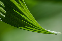 texture (jora63) Tags: macro green texture plante outside vert foliage extrieur feuillage