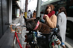 French Bulldog & Japanese Girl (lilacandhoney) Tags: voyage city travel dog color cute colors beauty japan asian japanese town asia moments day colours bulldog journey memory asie moment japon ville