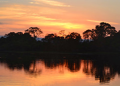 POCONE, BRAZIL - Pantanal/ ,  -  (Miami Love 1) Tags: sunset brazil latinamerica southamerica brasil brazilian brasileiro matogrosso fazenda latinamerican  rioclaro brasileno pocone southamerican transpantaneira