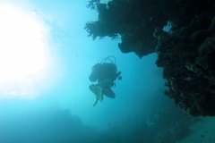 ...and the main reason for being here...  :-) (fxdx) Tags: el quseir red sea diving scuba egypt