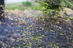 (NatalieShockleePhotography) Tags: color colors spring bright springtime