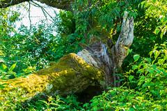 Baum (JBsLightAndShadow) Tags: summer field sunshine nikon sommer feld felder sunny fields heidelberg sonnig sonnenschein nikond3300 d3300