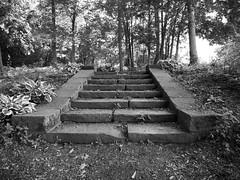 Stairs (heldermira) Tags: park trees blackandwhite monochrome outdoor urbanpark lmonochrome panasoniclumixgx85