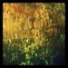 Reflet d'herbes...!!!