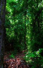 lightfall (MJphotograhpy) Tags: wood blue trees light shadow plant tree green fall nature forest waterfall woods deep environment lightfall deepwoods