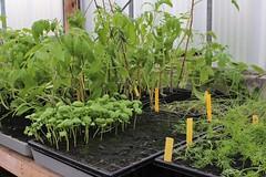Petits plants