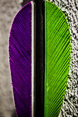 Arrow's feather (Ignacio M. Jimnez) Tags: verde green stripes feather violet pluma arrow violeta flecha macromondays