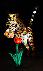 _DSC9750_2 (Elii D.) Tags: light fish flower animal night zoo monkey neon dragons lantern lampion dargon