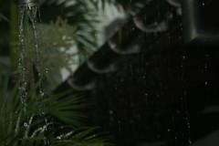 wet season FNQ ---- IMG_4289 (harry de haan) Tags: wet rain wetseason palmcove driftresort fnq queensland australia harrydehaan
