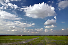 Rice and clouds () Tags: sky verde green field weather clouds landscape nuvole rice country campagna cielo fields polarizer paesaggio riso risaia risaie polarizzatore