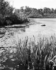 Marshes (Brian Tremblay, photographer) Tags: blackandwhite ontario canada art landscape ilford largeformat saultstemarie crowngraphic filmphotography