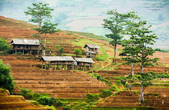 Part of Tule village (FineArt2C) Tags: terraces vietnam tulevillage trishedwardsphotographerdigitalartist