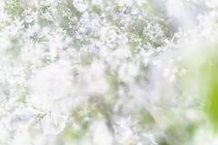 Flora Plenteous 61 (pni) Tags: flower suomi finland leaf helsinki petal multipleexposure helsingfors tripleexposure multiexposure skrubu pni pekkanikrus