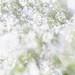 Flora Plenteous 61