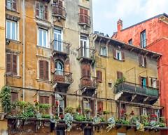 Lush Balcony (stephencurtin) Tags: italy colorful verona vegetation balconies lush