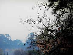 (II Ju Ele) Tags: naturaleza hojas rboles invierno niebla ramas