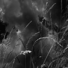 TERRA INCOGNITA (Grant Simon Rogers) Tags: london elysium flashing necropolis flasher littlebritain themagnificentseven londonmetropolitan elysianfields animamundi susurrus susurration carljung  englandshire terraincognita sooc westnorwoodcemetery individuation fortunateisles daylightwithflash windinthegrass grantsimonrogers islesoftheblessed themanwhoflashedinthegrass fujifilmx100t singinggrass thefirst10000 antiwarphotographer picturemakingnottaking pindarspark