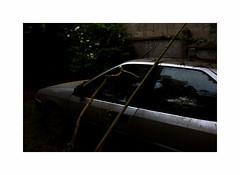 Heureux qui, comme Ulysse, (hlne chantemerle) Tags: voyage fleurs automobile route abandon soir mur extrieur reflets bois vitres mlancolie mtalise