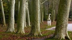 L'Octogone, parc de Sceaux, 12 novembre 2011 (Stphane Bily) Tags: statue ledefrance sceaux parcdesceaux platanes octogone stphanebily