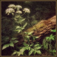 forest flower. (odinvadim) Tags: painterly forest landscape evening graphic textures textured flovers iphone iphoneart iphoneography iphoneonly snapseed mytravelgram painterlymobileart