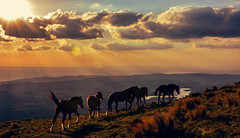 CABALLOS AL FINAL DEL DIA (Juan Montiel) Tags: light sunset red sky horse music naturaleza mountain luz sol nature argentina atardecer caballos dance flickr explore soledad montaña serenidad