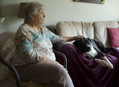 lounging with nans (Lou Musacchio) Tags: elderly granny pets dog pitbull portrait familylife montreal quebec canada