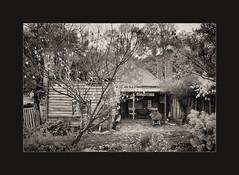 Collecting Firewood (Peter & Olga) Tags: mono backyard firewood collecting hillend d700 warryscottage olgabaldock