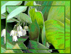 Muguet-Lily of the Vlley (Huguette T.) Tags: art texture nature fleurs spring creation muguet printemps may1st lillyofthevalley 1ermai