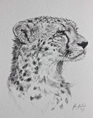 Cheetah pencil drawing (Red_Bloduewedd) Tags: africa portrait art animal pencil cat mammal sketch drawing african wildlife spots bigcat cheetah hunter spotted predator bigcats pencilsketch animalart pencildrawing animalportrait largecat africanwildlife wildlifepainting animaldrawing animalpainting animalsketch