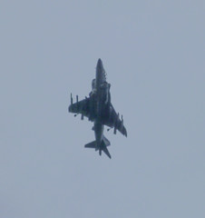 Harrier fly-over Photo