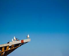 Seagulls (raspu) Tags: wood blue sky bird azul three boat madera barco ship seagull vessel morocco cielo maroc marroqui tres pajaro shipyard marruecos gaviota essaouira moroccan navio bote astillero