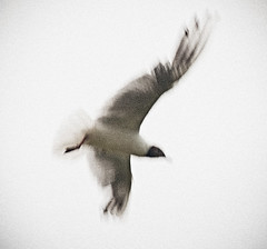 _DSC8650 (Alex Pezeshkmehr) Tags: sea motion blur birds wings long exposure flight