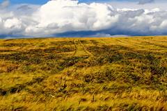 Gerstenfeld (Xtraphoto) Tags: landscape feld wolken landschaft gerste gerstenfeld