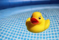 c'era una paperella che nuotava bella bella (mariovillani) Tags: water pool yellow canon toy toys eos duck piscina 7d acqua plastica gialla paperella canoneos7d mariovillani