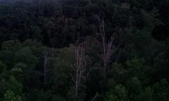 C360_2013-07-15-21-07-41-339 (thundergoat) Tags: tennessee gatlinburg smokymountains sevierville