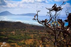 At Bay (MjZ Photography) Tags: ocean plant tree beach leaves hawaii bay honeymoon waikiki oahu diamondhead honolulu diamondheadcrater diamondheadstatemonument